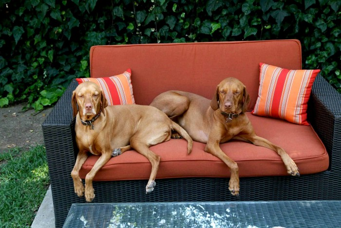 Outdoor Cushions for Pets