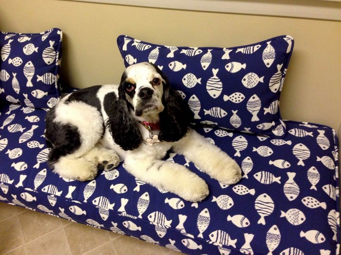 Outdura Cushions for Pets