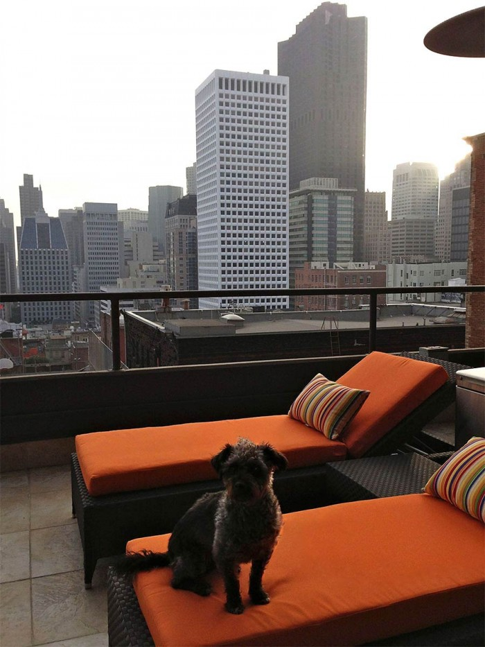 Chaise Lounge Cushions for Pets