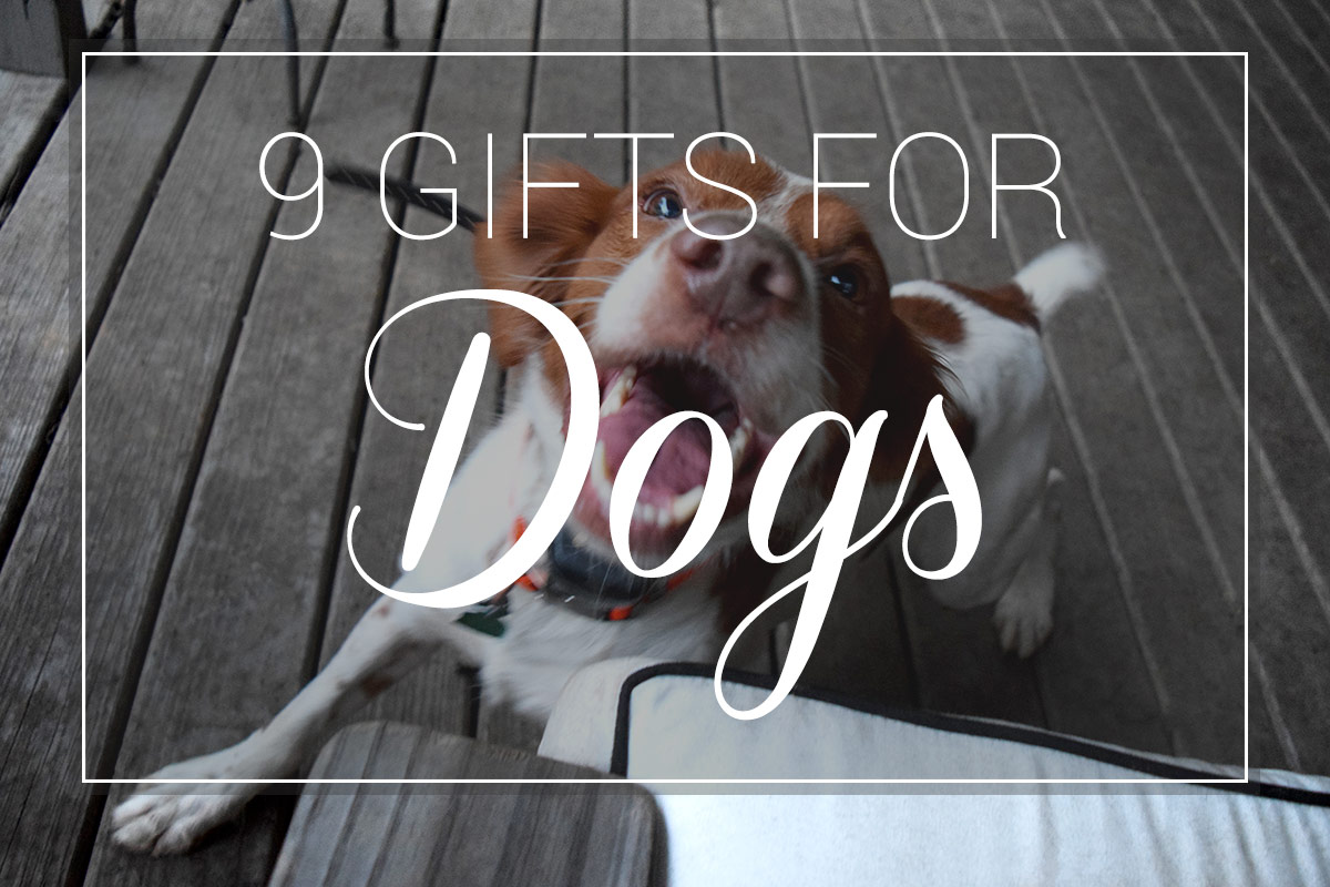 9 Gifts for Dogs