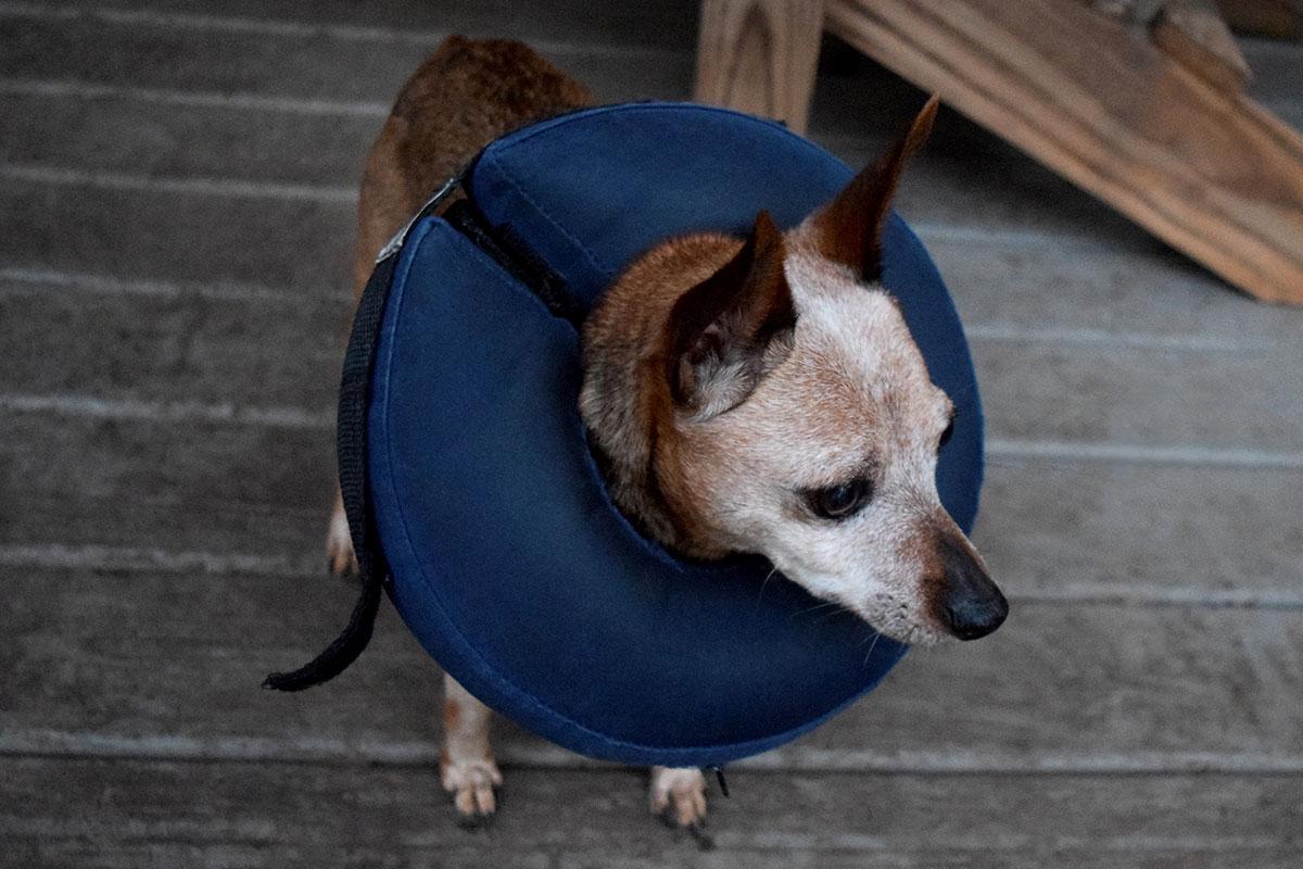 Inflatable Dog Collar