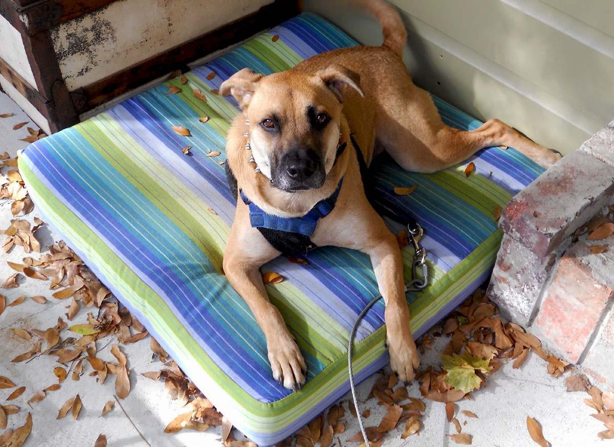 Miles' Sunbrella Dog Bed