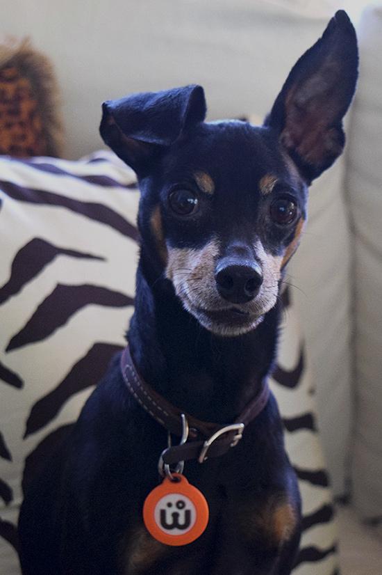 WagAware Dog Charm